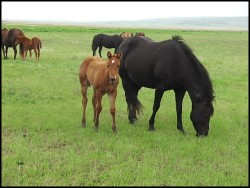 Hillview Paints and Quarters Horses for sale SK