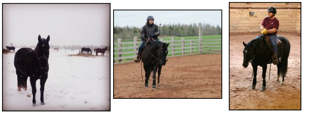 Horses for sale SK - Hillview Paints and Quarter Horses