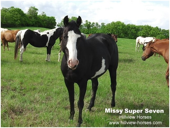 Hillview Paints and Quarter Horses for sale - SK